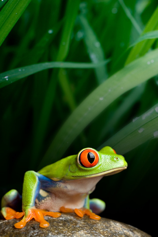 Froggy iPhone Wallpaper