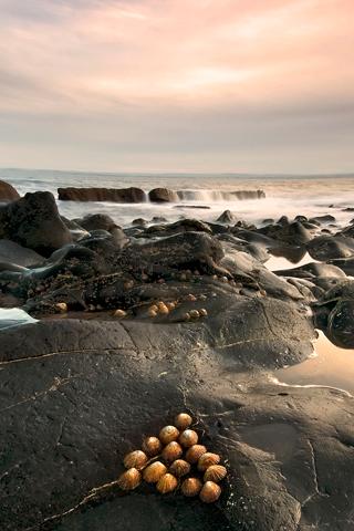 Shore Rocks iPhone Wallpaper