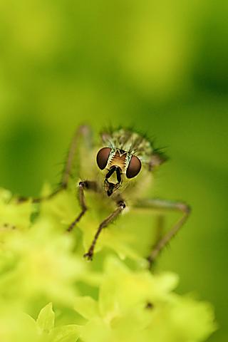 Fly Closeup iPhone Wallpaper